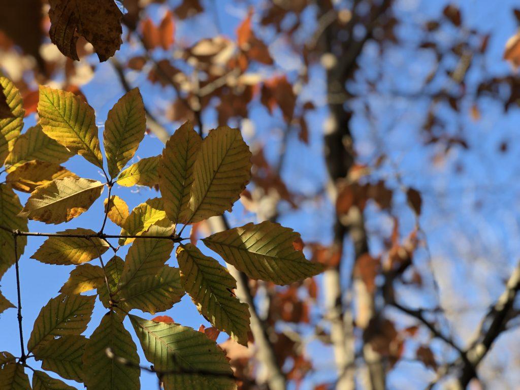 青い空と紅葉した葉